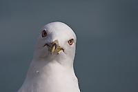 Gulls are pretty too.....©2009, Sean Phillips.http://www.Sean-Phillips.com