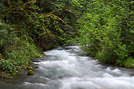 Higher than normal water levels during spring runoff in Borden Creek in the Chilliwack River Valley, Chilliwack, British Columbia, Canada.