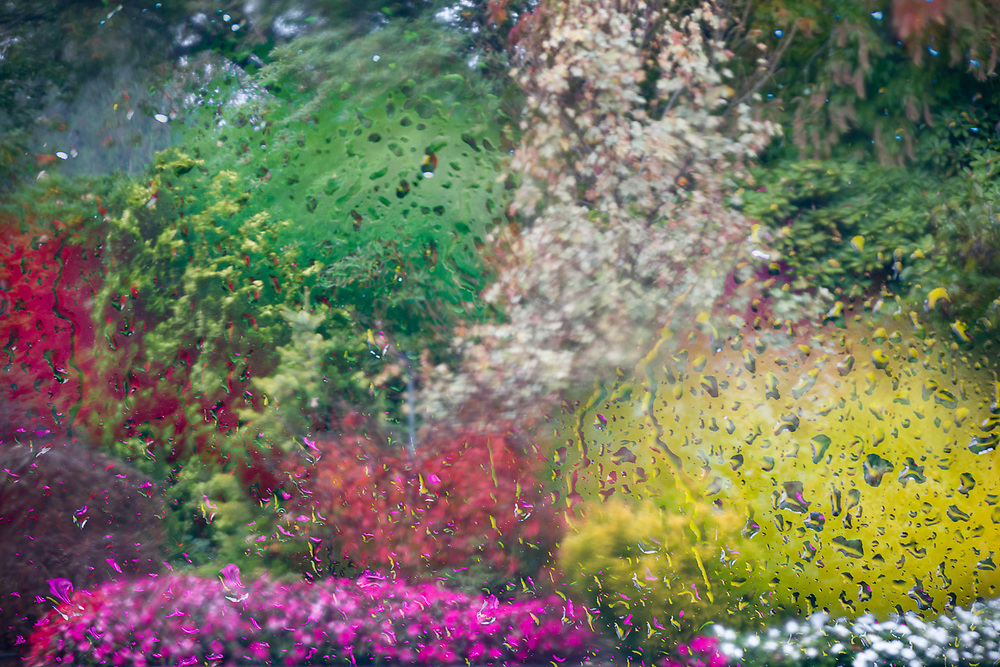 Abstract view of a domestic garden viewed through a vehicle window with rain droplets, October, Olympic Peninsula, Washington, USA