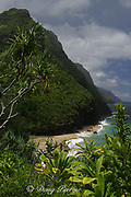 scenery along Kalalau trail on the Napali Coast ( north coast ), between Ke'e Beach and Hanakapiai Valley, Kauai, Hawaii, USA ( Central Pacific Ocean )