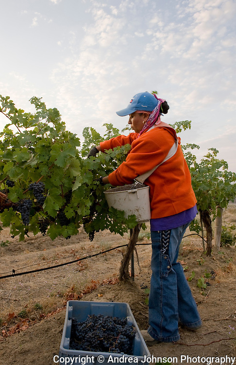 Tapteil Vineyard & Winery, Red Mountain AVA, Yakima Wine valley, eastern Washington, USA