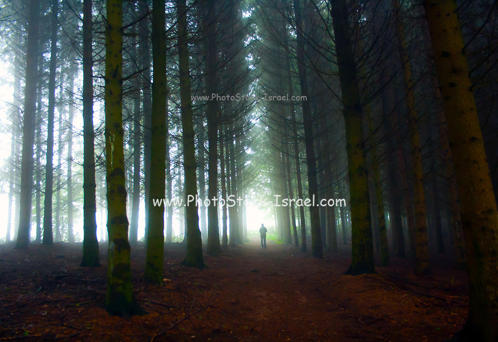 lights penetrates through the trees of a dense forest. Photographed in Belgium
