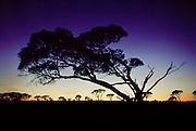 Golden sunrise over South Australia during the Pentax Solar Car Race. South of Glendambo.