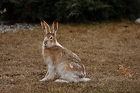 Look what came to visit on Easter Sunday!  We had a pair of these rabbits in our yard. Karma!..©2009, Sean Phillips.http://www.Sean-Phillips.com