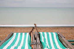© under license to London News Pictures. 12/06/12. Heavy rainfall across the south east. Deck chairs are chained up overlooking and empty beach in june. The met office has issued severe weather warnings in England and Wales. Unseasonal weather in the south east has caused flooding across Sussex has been badly hit. Brighton XAVIER ITTER/LNP