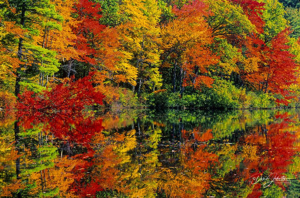 Brilliant autumn colour reflected in calm waters of Lake Chocorua, Chocorua, NH, USA