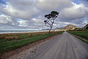 East Cape gravel road is a spectacular drive out to the actual East Cape and its lighthouse. This old Pohutukawa add some depth to the scenery.