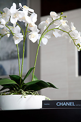 White_orchid