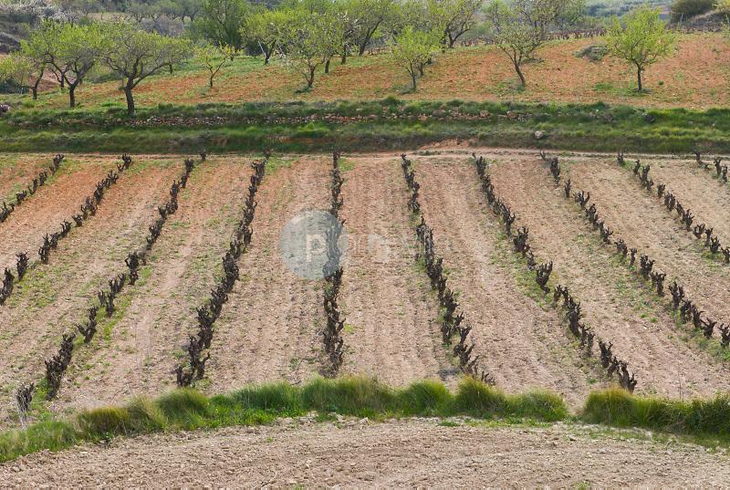 Campos agrícolas en Villafranca del Penedés. Barcelona ©Antonio Real Hurtado / PILAR REVILLA