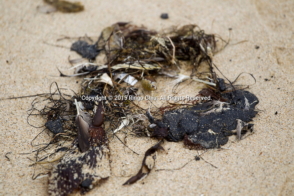 The tar-like substance that washed ashore is seen in Manhattan Beach, California on Thursday, May 28, 2015. Popular beaches along nearly 9 miles of Los Angeles-area coastline are off-limits to surfing and swimming after tar-like substance washed ashore. The beaches along south Santa Monica Bay appeared virtually free of oil Thursday morning after an overnight cleanup, but officials aren't sure if more tar will show up.  (Photo by Ringo Chiu/PHOTOFORMULA.com)