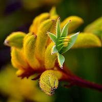 Wild-Flowers: Kings Park