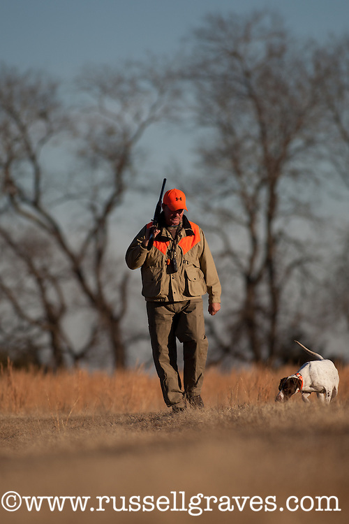 ENGLSIH POINTER WITHA  QUAIL HUNTER IN THE BACKGROUND