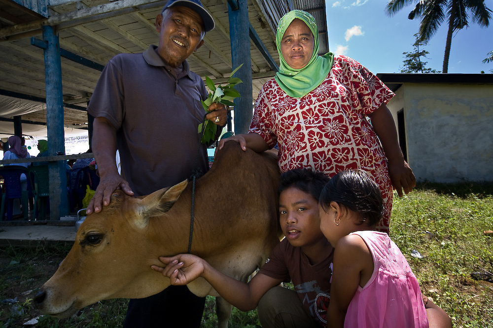 Kuala Trang Village near Meulaboh - Aceh, Indonesia  Nov. 2008. (Heifer Participant) Raiman(left) gives his calf to Sukina (right) during a passing on the gift ceremony. Below Sukina's son Gendon plays with his cousin Rita.