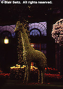 Topiary, Chrysanthemum Celebration, Longwood Gardens, Kennett Square, Chester Co., PA