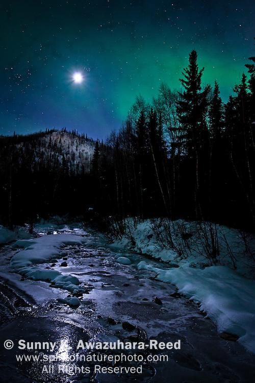 The neon green aurora and moon illuminate the sky above Chena River, Chena Hot Springs Resort, Fairbanks, Interior Alaska, winter.