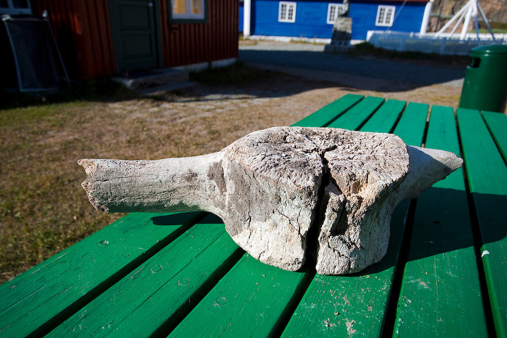 Old whale vertebra lying on a table near the museum in Sisimiut, the second largest town in Greenland