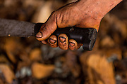 A worker holds a machete as he chops roasted blue agave hearts at an artisanal Mezcal distillery November 5, 2014 in Matatlan, Mexico. Making Mezcal involves roasting the blue agave, crushing it and then fermenting the liquid.