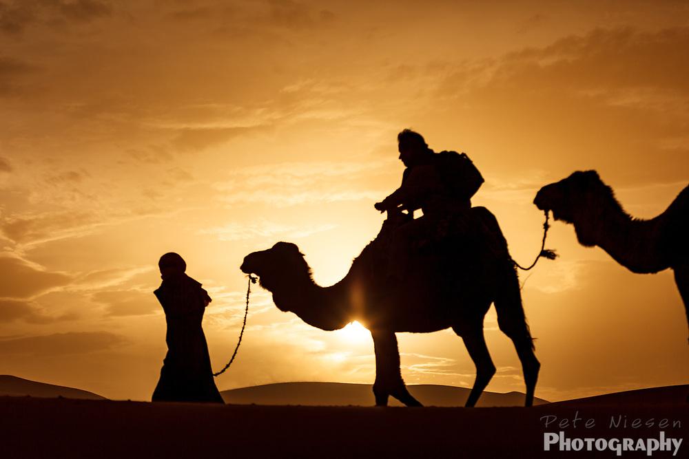 silhouette of berber bedouin man leading camel caravan across dunes in the Sahara desert at sunset