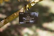 Tree species identification label, National arboretum, Westonbirt arboretum, Gloucestershire, England, UK - Japanese Maple red wood group, Eddisbury
