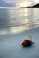 coconut laying on tropical beach