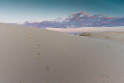Tracks in sand, Monahans Sandhills State Park, Texas, USA.