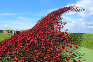 Wave of Poppies