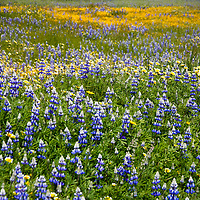 Shell Creek Wild Flowers