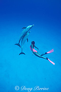 athlete and television personality Mikako ( Miki ) Kotani ( two medals in synchronized swimming in 1988 Olympics ) swims with wild Atlantic spotted dolphins, Little Bahama Bank, Bahamas