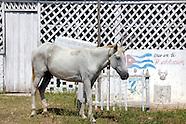 Las Martinas area, Pinar del Rio, Cuba.