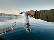Hunting game birds like Ptarmigan, by boat and with a rifle, with Bent and Dina Ignatiussen. Life in and around the small Inuit settlement of Isortoq (population of 64), in East Greenland.