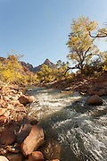 River next to the Pa'rus Trail, Zion National Park, Utah, United States of America