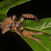 Borneo - Danum Valley - Invertebrates