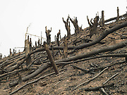 Slash and burn landscape in the Phunoi ethnic minority village of Sinesai, Phongsaly province, Lao PDR. Swidden cultivation or 'hai' in Lao consists of cutting the natural vegetation, leaving it to dry and then burning it for temporary cropping of the land, the ash acting as a natural fertiliser. Shifting cultivation practices, although remarkably sustainable and adapted to their environment in the past, have come under increasing stress in recent decades and are now starting to be a major problem in Lao PDR, causing widespread deforestation and watershed degradation.