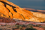 Sunset light illuminates colorful orange, pink, yellow, and white sandstone in White Domes area of Valley of Fire State Park, Nevada, USA. Desert Primrose (or Dune Evening Primrose, Oenothera deltoides) flowers bloom in the foreground. Starting more than 150 million years ago, great shifting sand dunes during the age of dinosaurs were compressed, uplifting, faulted, and eroded to form the park's fiery red sandstone formations. The park also boasts fascinating patterns in limestone, shale, and conglomerate rock. The park adjoins Lake Mead National Recreation Area at the Virgin River confluence, at an elevation of 2000 to 2600 feet (610-790 m), 50 miles (80 km) northeast of Las Vegas, USA. Park entry from Interstate 15 passes through the Moapa Indian Reservation.