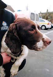 Police sniffer dog; drugs unit; West Yorkshire UK