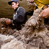 Mongolia. the cashmere and wool market outside The capital city Ulan Baatar. In the warehouse millions  of dollars of raw cashmere.   Ulan Baatar -    /   le marche du cachemire et de la laine a l ouest de la capitale Oulan Bator. dans les entrepots sont stockes des des dizaines de tonnes de cachemire brut, representant des millions de dollars, a 40 $ le kg.   Oulan Bator - Mongolie