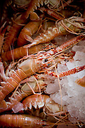 Belo Horizonte_MG, Brasil...Detalhe de camaroes para  preparacao de receitas no festival gastronomico Sabor e Saber...Detail of shrimp for the recipes preparation in the gastronomy festival Sabor e Saber...FOTO: BRUNO MAGALHAES / NITRO