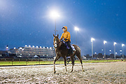 November 1-3, 2018: Breeders' Cup Horse Racing World Championships. Highway Star