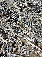 VLIELAND - Schelpen op het strand. ANP COPYRIGHT KOEN SUYK