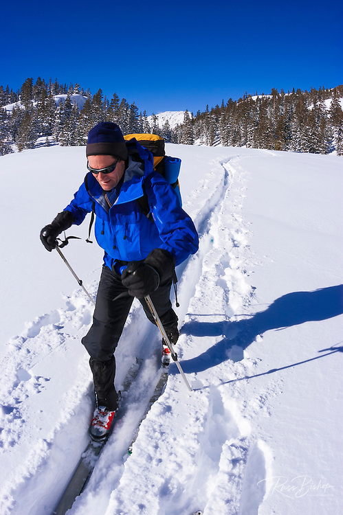 Backcountry skier in fresh snow below Tioga Pass, Inyo National Forest, Sierra Nevada Mountains, California USA