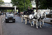 Horse drawn carriage pulled by two white horses on Victoria Embankment in central London. The wedding carriage passes a black taxi cab, a more conventional mode of rtansport that we are used to seeing.