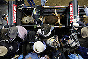 A rider mounts a bull in the chute during a Professional Bull Riders, Built Ford Tough Series event at the Sprint Center, Saturday, Feb. 11, 2017, in Kansas City, Mo. (AP Photo/Colin E. Braley)