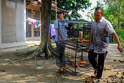 October 9, 2018 - PEKANBARU, INDONESIA - OCTOBER 9, 2018: Officers seen carrying baby sun bears (helarctos malayanus) at transit clinic of Indonesian Center for Natural Resources Conservation (BBKSDA) in Pekanbaru, Riau Province, Indonesia on October 9, 2018. Indonesian Center for Natural Resources Conservation takes care of baby sun bears separated from its mother because of change forest as original habitat of wild animals that become industrial plantations and oil palm plantations. (Credit Image: © Dedy Sutisna/ZUMA Wire)