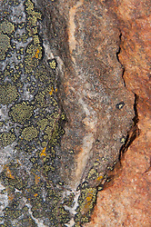 Rock Face and Lichens, North Cascades National Park, Washington, US