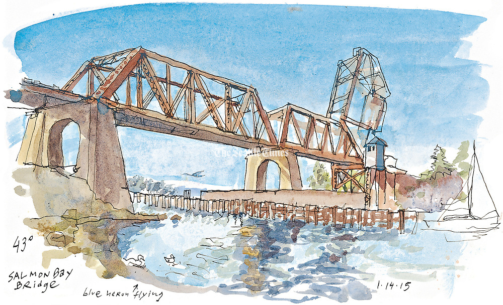 The historic Salmon Bay Bridge sketched from commodore park near the Ballard Locks.  Blue Herons standby looking for fish. <br /> <br /> Gabriel Campanario / The Seattle Times
