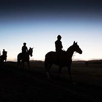 Racehorses At Dawn