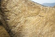 Pony Preserve in Heingang, Imphal, Manipur. Cyce name is Bhorat.