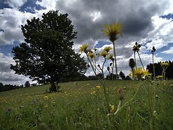CZECH REPUBLIC VYSOCINA NEDVEZI 16JUL11 - Landscape near the village of Nedvezi in Vysocina, Czech Republic.....jre/Photo by Jiri Rezac....© Jiri Rezac 2011