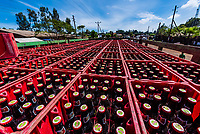 A delivery of Dashen Beer, West Gojjam, Amhara region, Ethiopia.