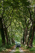 Mercedes car driving through avenue of tall plane trees and looming canopy of branches on road to nowhere in France